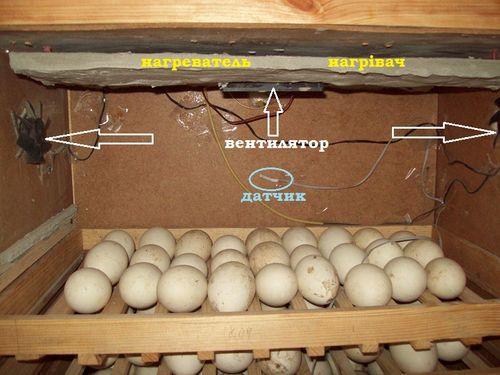 temperatura-v-inkubatore_6
