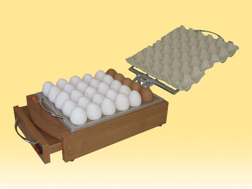 cesarki-v-inkubatore_2