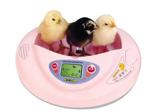цыплята с инкубатора