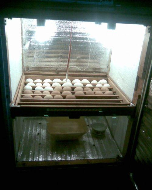 inkubator-dlya-brojlerov_3