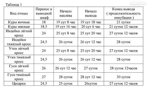 tablica-temperatur-dlya-inkubatora_4