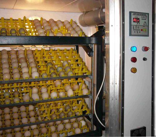 zakladyvat-yajca-v-inkubator_4