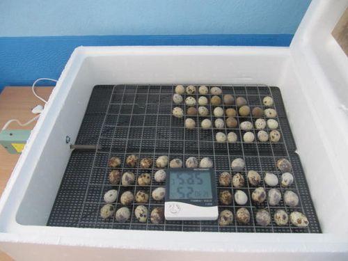 inkubator-idealnaya-nasedka_1
