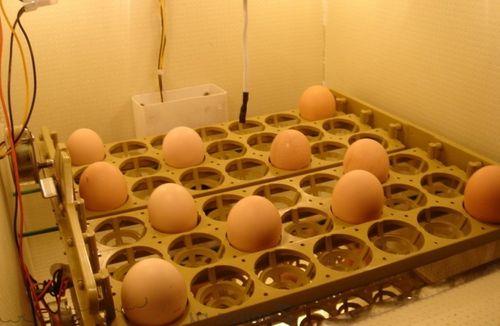 inkubatory-zolushka_3