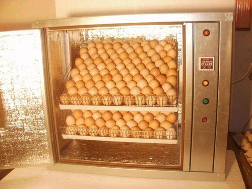 bolshie-inkubatory-dlya-yaic_1