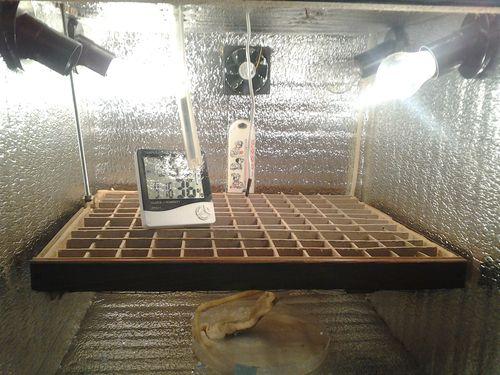 inkubator-iz-korobki_5