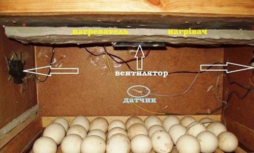 inkubator-iz-korobki_7