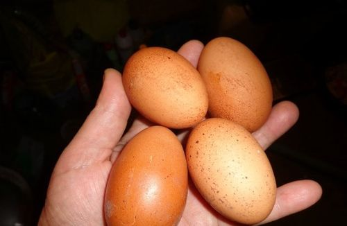 Отбор яиц