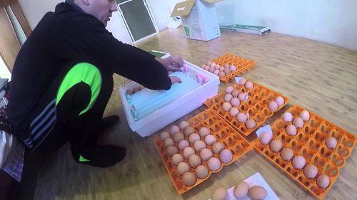 inkubator-ipx-10-petushok_2