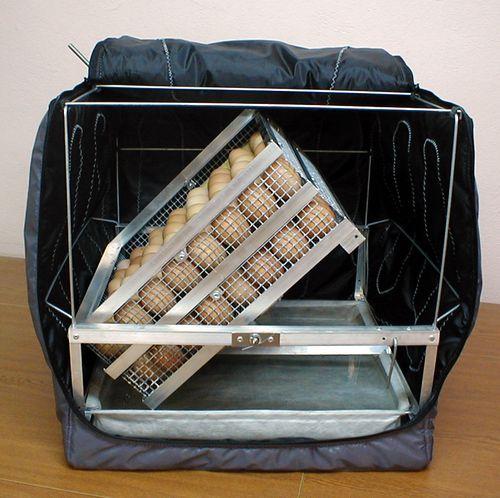 obzor-inkubatorov-tgb_5