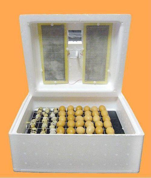 skolko-stoit-inkubator_6