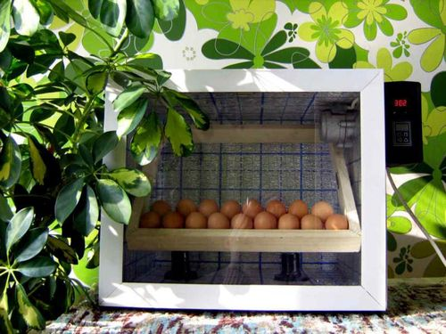 malenkie-inkubatory_4