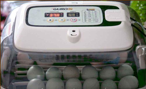 inkubator-king-suro-20_2