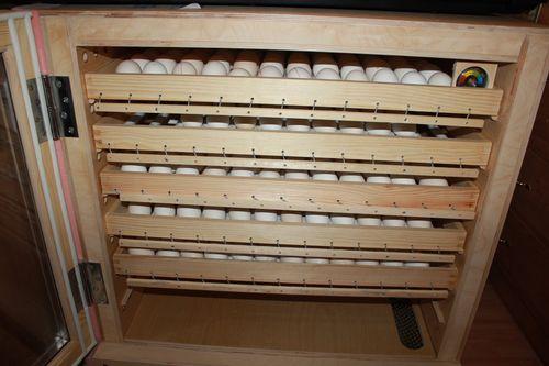 fermerskie-inkubatory-dlya-yaic_4