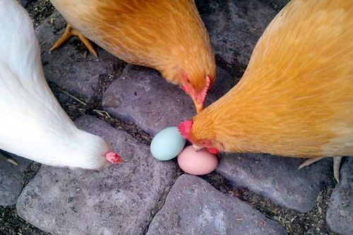 Муляжи яиц