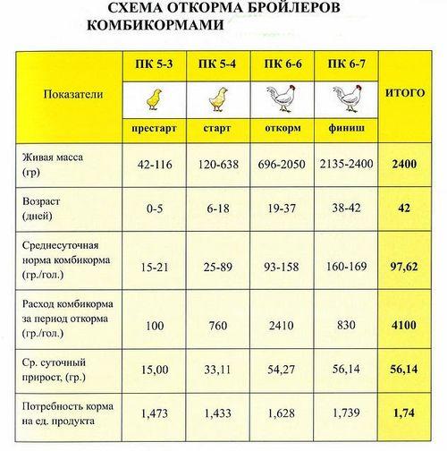 Порода бройлеров Росс-500 и особенности их выращивания