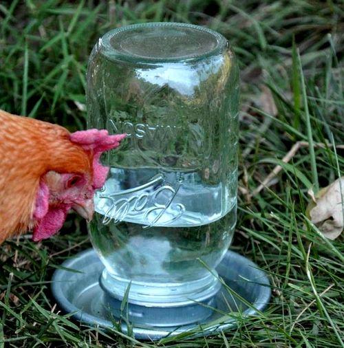Советы как сделать поилку для кур