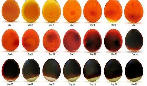 Как просвечиваются яйца на разных сроках