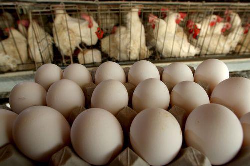Яйца бройлерных кур